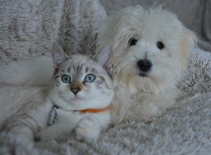 Alga spirulina per cani e gatti